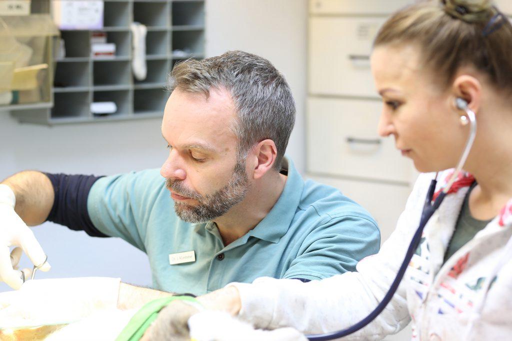 Tierarztpraxis Dr. Stefanie Westphalen - Leistungen